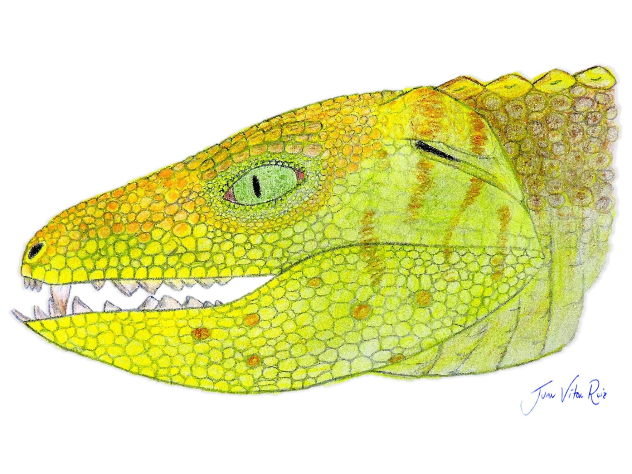 Desenho do Caipirasuchus attenborough